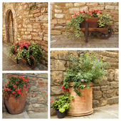 Planters with flowers and old stonewall — Foto Stock