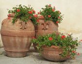 Tuscan terracotta planters — Foto Stock