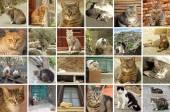 Italian street cats — Stock Photo