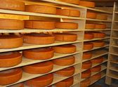 In cheese storage — Stock Photo