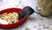 Little Mouse — Stock Photo