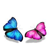 Pink and blue butterflies — Stock Photo