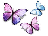 Three butterflies — Stock Photo