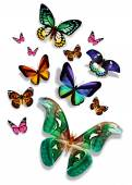 Many colorful butterflies — Stock Photo