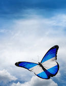 Argentina flag butterfly — Stockfoto