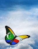 Comoros flag butterfly — Photo