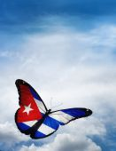 Cuba flag butterfly — Stock Photo