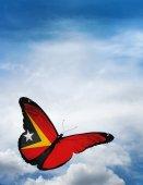 East Timor flag butterfly — Zdjęcie stockowe