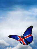 Iceland flag butterfly — Stock Photo