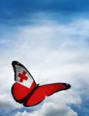 Tonga flag butterfly — Stock Photo