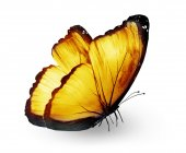 Yellow color butterfly — Stock Photo