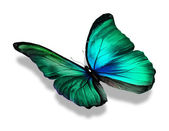 Green color  butterfly — Foto Stock