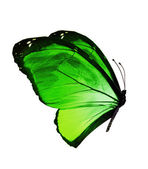 Green color  butterfly — Stock Photo