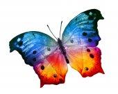 Kolorowy motyl — Zdjęcie stockowe