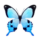 Blue color butterfly — Stock Photo
