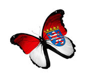 Hesse flag butterfly — Foto Stock