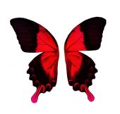 Wings of red and black butterfly — Stock Photo