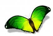 緑の色の蝶 — ストック写真
