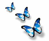 Bavaria flag butterflies — 图库照片