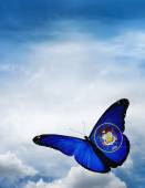 Utah flag butterfly — Foto Stock