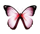 White and red color butterfly — Stock Photo