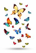 Flock of colorful butterflies — Stock Photo
