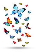 五颜六色的蝴蝶的羊群 — 图库照片