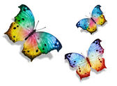 Three colorful butterflies — Stock Photo