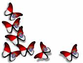 Hesse flag butterflies — Stockfoto