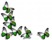 Saxony flag butterflies — Stock Photo