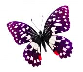 Purple color butterfly — Stock Photo