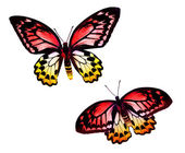 Two colorful butterflies — Stock Photo