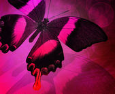 Valentine's day background with butterfly — Stock Photo
