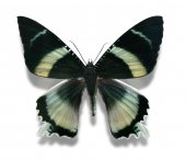 Bid colorful butterfly — Stock Photo