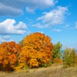 Autumn trees with golden leaves against the blue sky with white clouds — Stock Photo #54898123