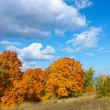Autumn trees with golden leaves against the blue sky with white clouds — Stock Photo #54898143