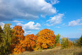 Autumn trees with golden leaves against the blue sky with white clouds — Stock Photo