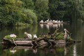 Large group of waterfowl on the lake — Stock Photo