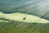 Europejskie Las i łąka — Zdjęcie stockowe