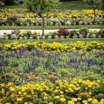 Flowerbeds in the castle garden — Stock Photo #55745467