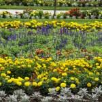 Flowerbeds in the garden — Stock Photo #58408219