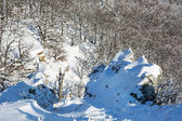 Rocks and deciduous forest in winter — Stock Photo