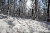 Snowy footpath in winter white forest — Stock Photo
