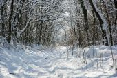 Snowy footpath in winter forest — Stock Photo