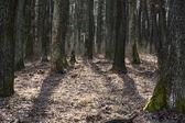 Dichte bladverliezende wouden in achtergrondverlichting — Stockfoto