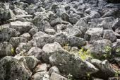 Andesite stone sea in Slovakia — Stock Photo