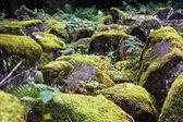 Andesite stone sea — Stock Photo