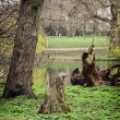Squirrel sitting on a tree stump in the St. james's park — Stockfoto #70365819