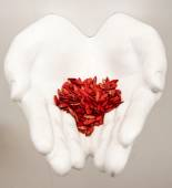 Red seeds in the hands — Stock Photo