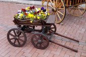 Wooden cart inside colorful flower in ankara — Stock Photo